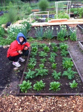 Growing Organic Kale and Spinach