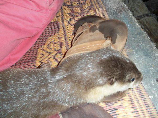 Railay beach Rasta Man and his otter