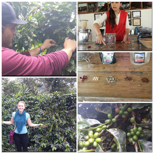 Salento Coffee Region