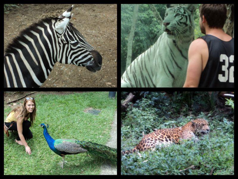 cali zoo colombia