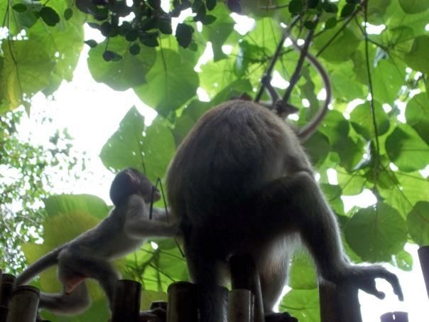Railay Beach Thailand monkeys