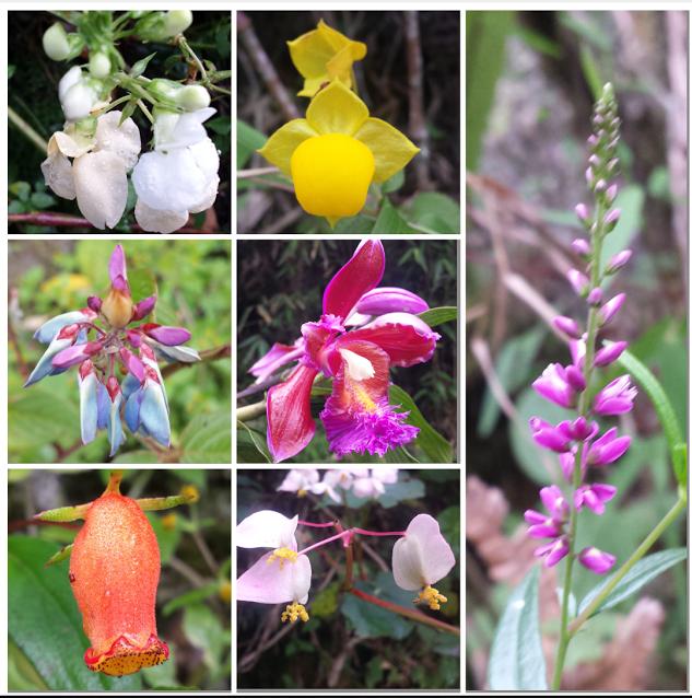 Machu Piccu Flowers