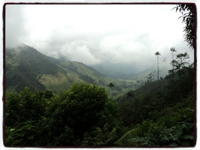 A view of the Cocora Valley