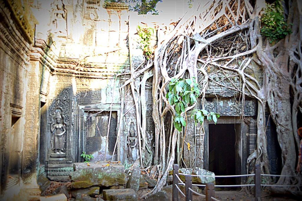A view of the Ta Prohm temple in Cambodia where the movie Tomb Raider was shot. Given the increased tourism to the temple, it is rare to find a monk meditating in it anymore. Yet the interesting takeover of the temple by a Banyan tree makes it a wonderful place of meditation.